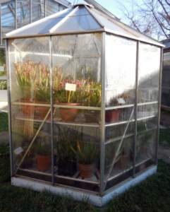 piante carnivore serra