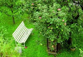 frutteto melo poco spazio