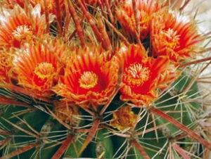 piante a rischio estinzione
