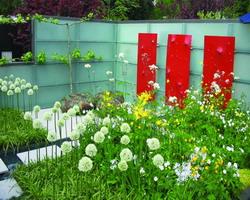 allium bianchi; giardino piccolo