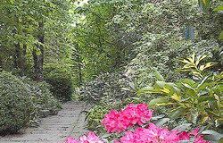 bosco in giardino