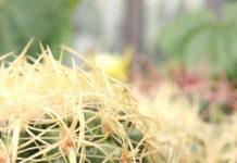 cactus dry garden