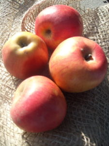 2011/11/frutti%20antichi_01.jpg