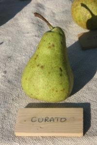 2011/11/frutti%20antichi_04.jpg