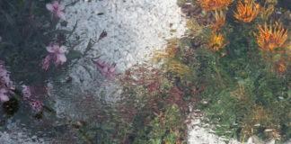 gazania giardino d'estate