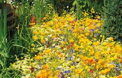 giardino giallo