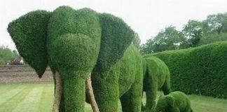 elefante d'erba sculture erba