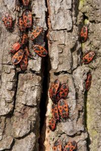 2011/11/insetti%20web.jpg