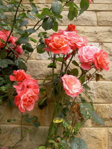 2011/11/roseterrazzo_01.jpg