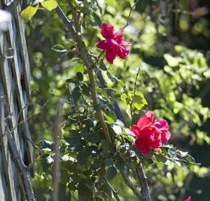 2011/11/roseterrazzo_04.jpg