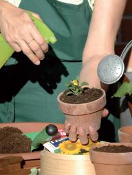 seminare fiori e ortaggi
