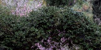 arco edera