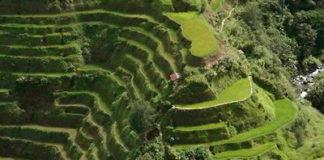 banaue giardino in pendenza