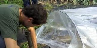 2012/01/coltivazione_in_serra.jpg