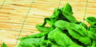 2012/01/coltivazione_spinaci.jpg
