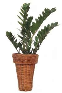 pianta d'appartamento
