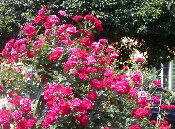 2012/04/roserosa_afb08c25.jpg
