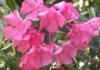 2012/05/oleandro_post_ea402445.JPG