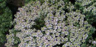 2012/12/timo-fiorito-faustinii_fa70e2a5.jpg