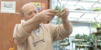 2013/03/keiki-phalaenopsis-video_1e5fcea9.JPG
