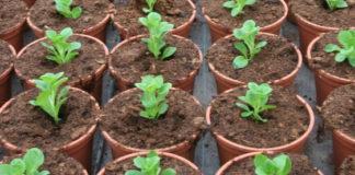 orto semi piantine