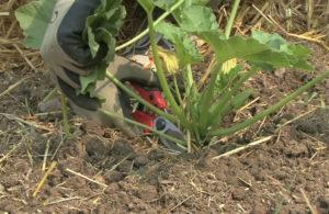 2013/07/coltivazione_zucchine_1ce9f261.jpg
