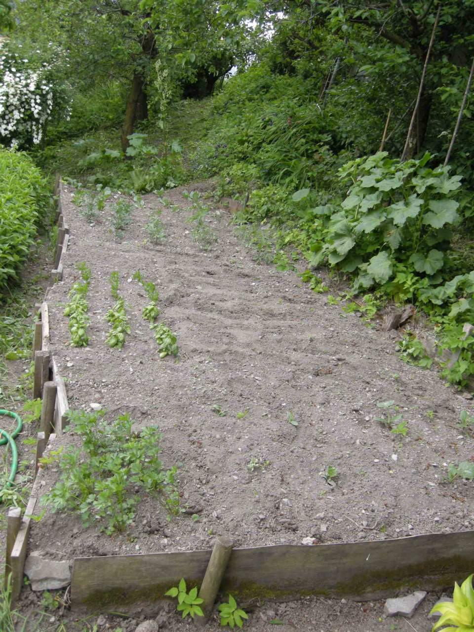 Fiori Da Piantare Nell Orto in giardino e nell'orto: come seminare - passione in verde