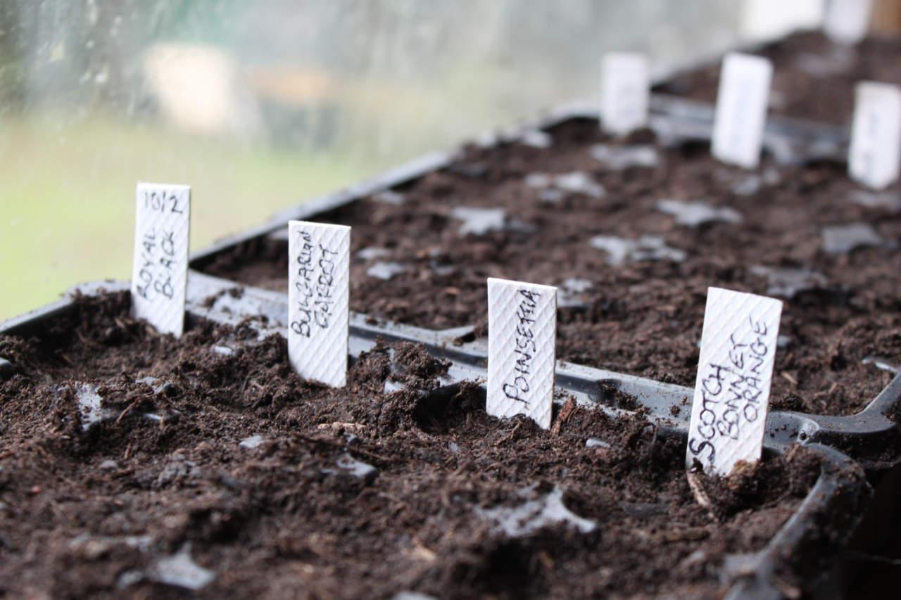 Cosa Seminare A Gennaio coltivare ortaggi, fiori e alberi da frutto partendo dalla