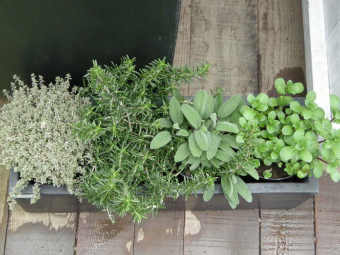 orto sul balcone piante aromatiche