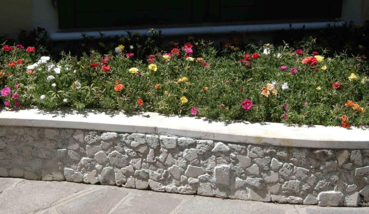 Ortensie Bianche Come Curarle come curare le piante se fa molto caldo - passione in verde