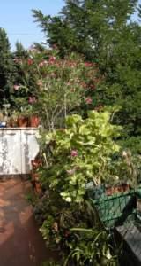 difendere le piante caldo terrazzo