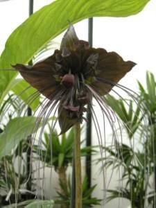piante insolite tacca