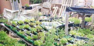 isroponica coltivazione fuorisuolo