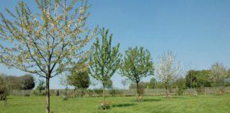 FRUTTETO alberi giovani