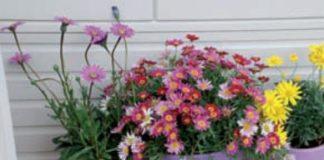 terrazzo ecosostenibile vasi colorati con margherite colorate