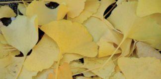 raccogliere le foglie