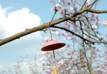 giardino per api e farfalle