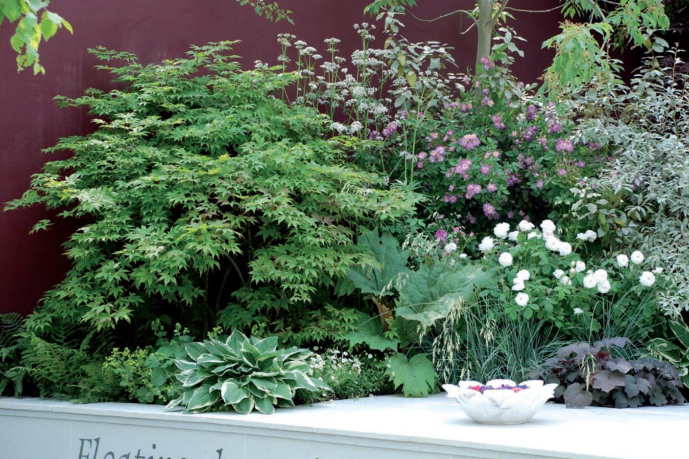 Piante Piccole Da Giardino piante da ombra per il giardino - passione in verde