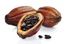 2016/05/cacao_e58567da.jpg