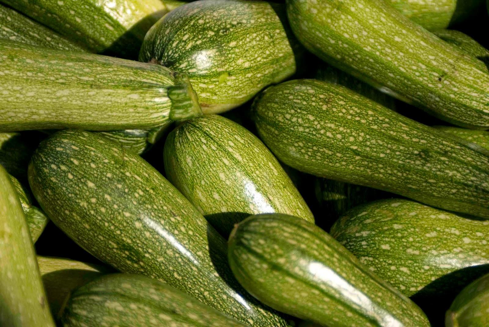 Varietà Zucchine Da Fiore zucchini, come coltivarli dalla semina al raccolto