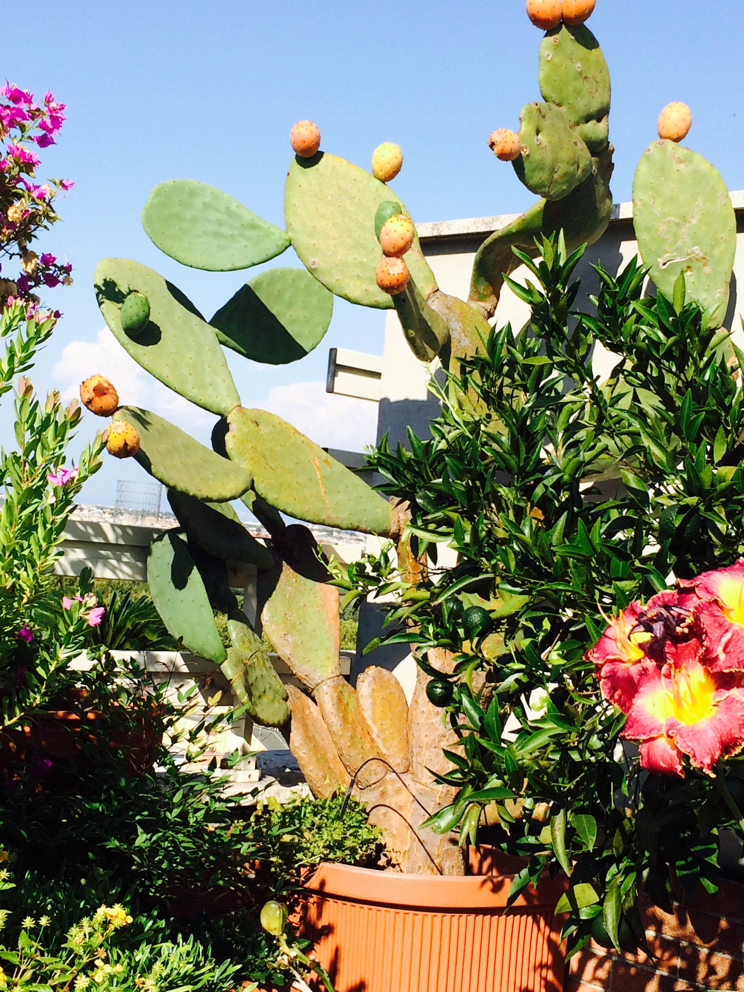 Fiori E Piante Commestibili piante grasse dai frutti commestibili - passione in verde