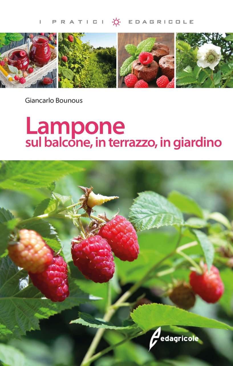 Come Coltivare I Lamponi lampone: frutti di bosco facili da coltivare - passione in verde