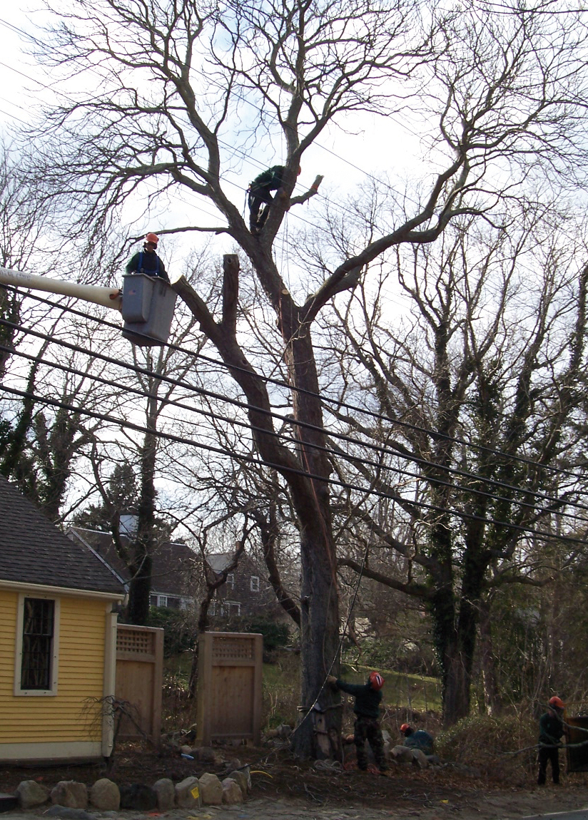 Alberi Ad Alto Fusto Quali Sono potare gli alberi, come e quando farlo – parte 3 - passione