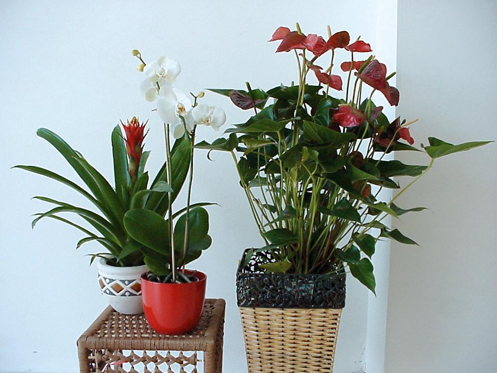 Piante Da Appartamento Come Curarle.Piante Da Appartamento Come Curarle In Inverno Passione In Verde