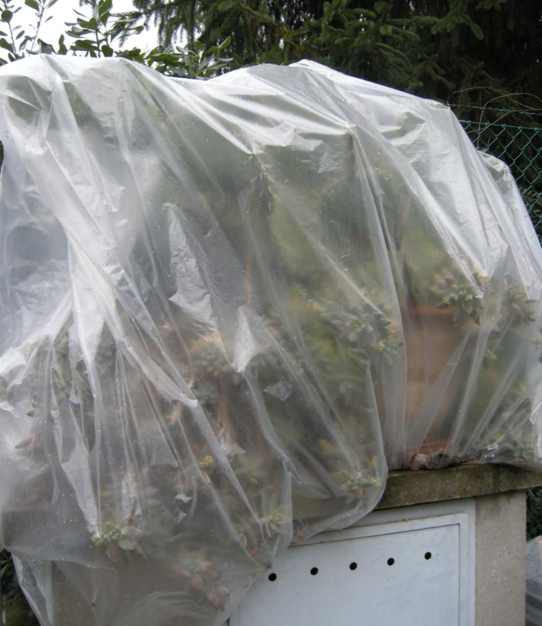 piante_grasse_protezione_inverno