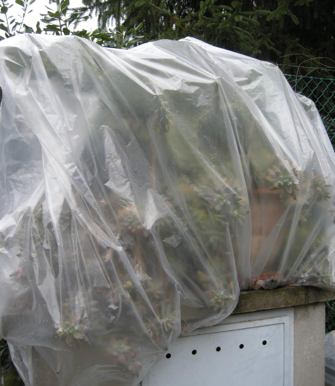 Piante Grasse Da Giardino piante da esterno: quando e quali specie proteggere in
