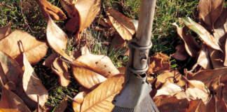 foglie compost