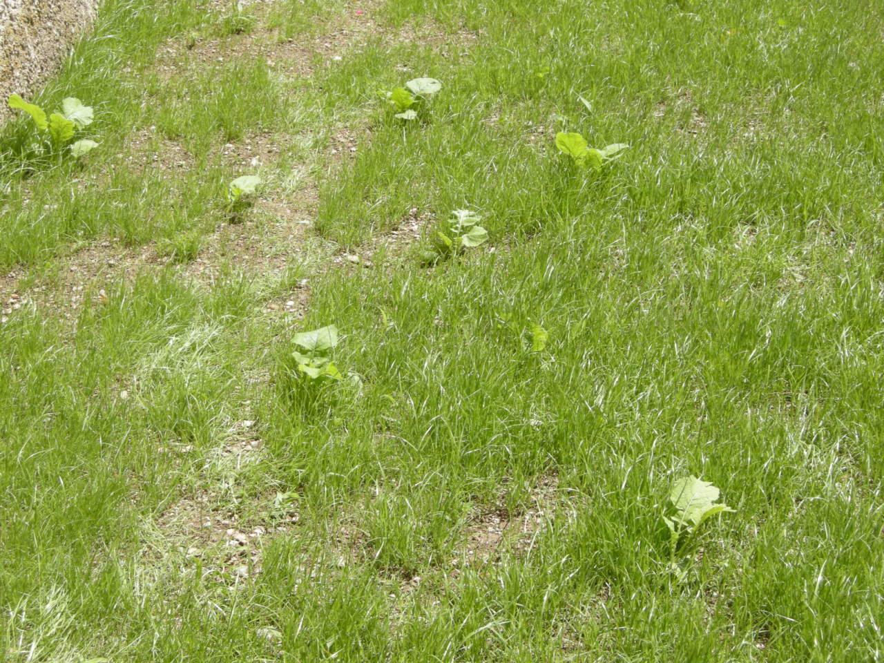 Come Seccare Le Piante erbe infestanti: cosa sono e come eliminarle - passione in verde