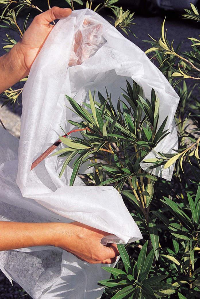 protezione_piante