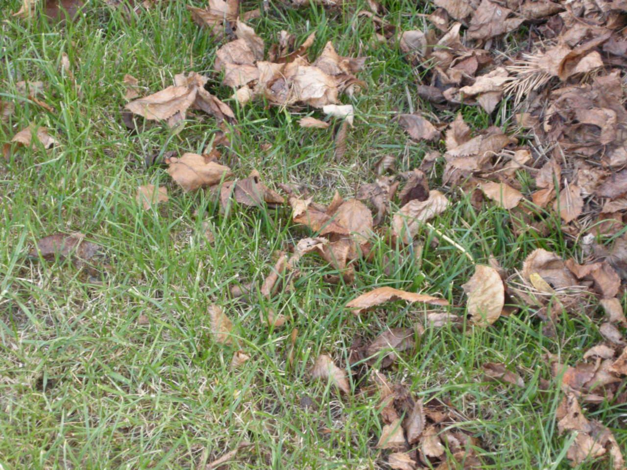 Concime Per Prato Autunnale cura del prato in autunno e in inverno nel nord e nel sud